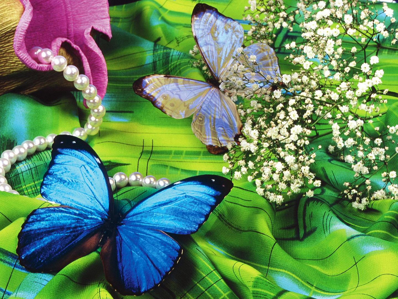 Banco de imagenes y fotos gratis wallpapers de mariposas 6 for Fondos movibles para pc