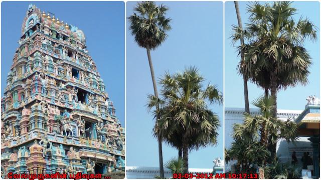 Cheyyaru Vedhapureeswarar Temple