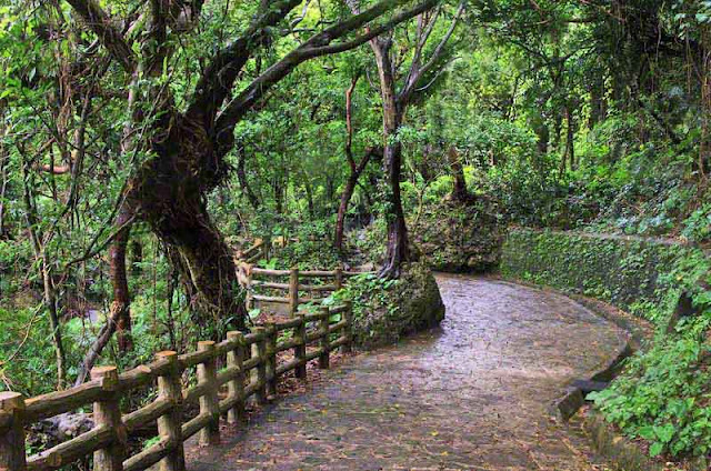 Stone path through a wooded park after rainfall