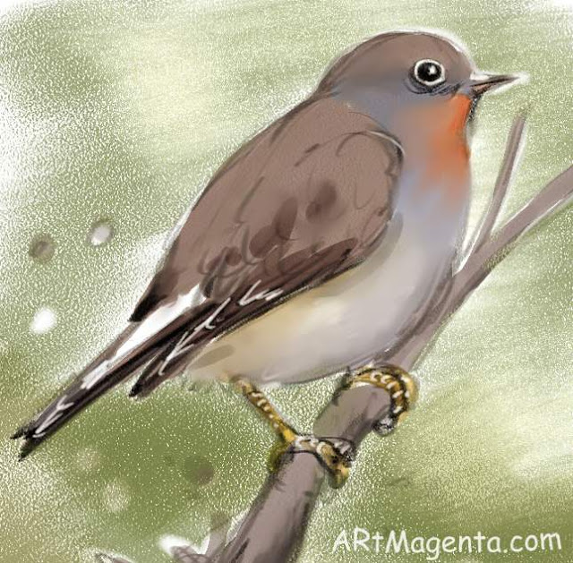 Red breasted Flycatcher, a bird sketch by Arrtmagenta