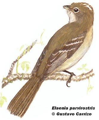 pampas birds