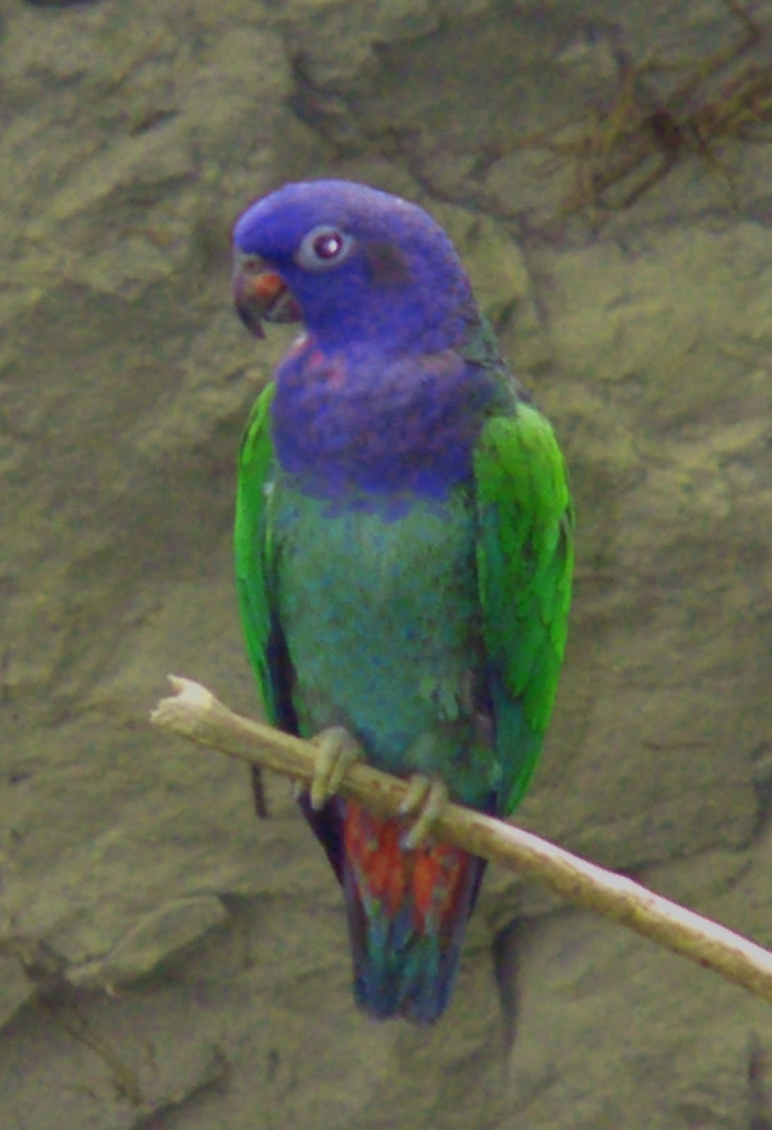 All About Birds Types Of Lovely Pet Birds As Your Home Companion