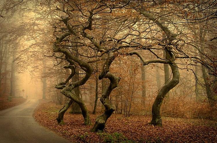 Mysterious Crooked Forests Of Poland You Must Visit Once Here - To this day the mystery of polands crooked forest remains unexplained