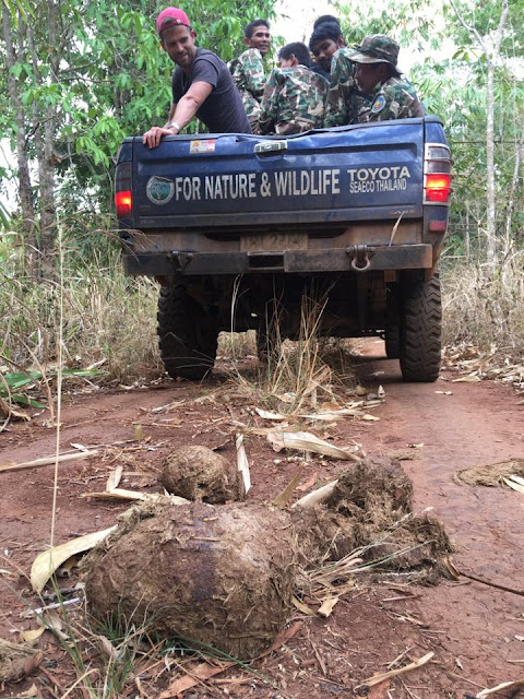 Our trusty truck-Moonliner winds its way up the Khao Ruak Road, a steep, rocky, treacherous, rutted and dry road. It becomes a nightmare if it rains. Signs of elephants...yep one big dung pile. — with Ádám Molnár.
