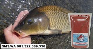 Umpan Ikan Mas Subang Khusus Indukan