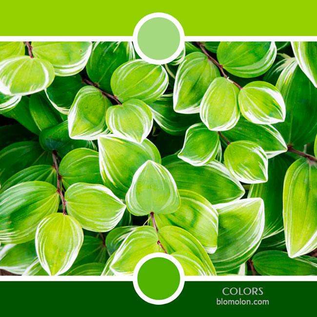 variedad_en_color_color_80