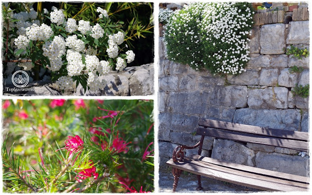 Gartenblog Topfgartenwelt Kroatien: Lungo Mare in Opatija, mediterrane Pflanzen