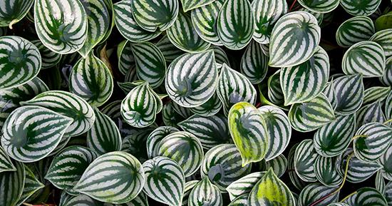 22 jenis tanaman pengisi yang biasa di gunakan pada vertikal garden