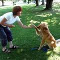 hacer que su perro obedezca