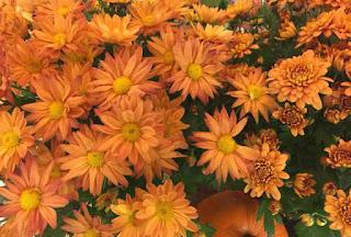 Halloween orange flowers.