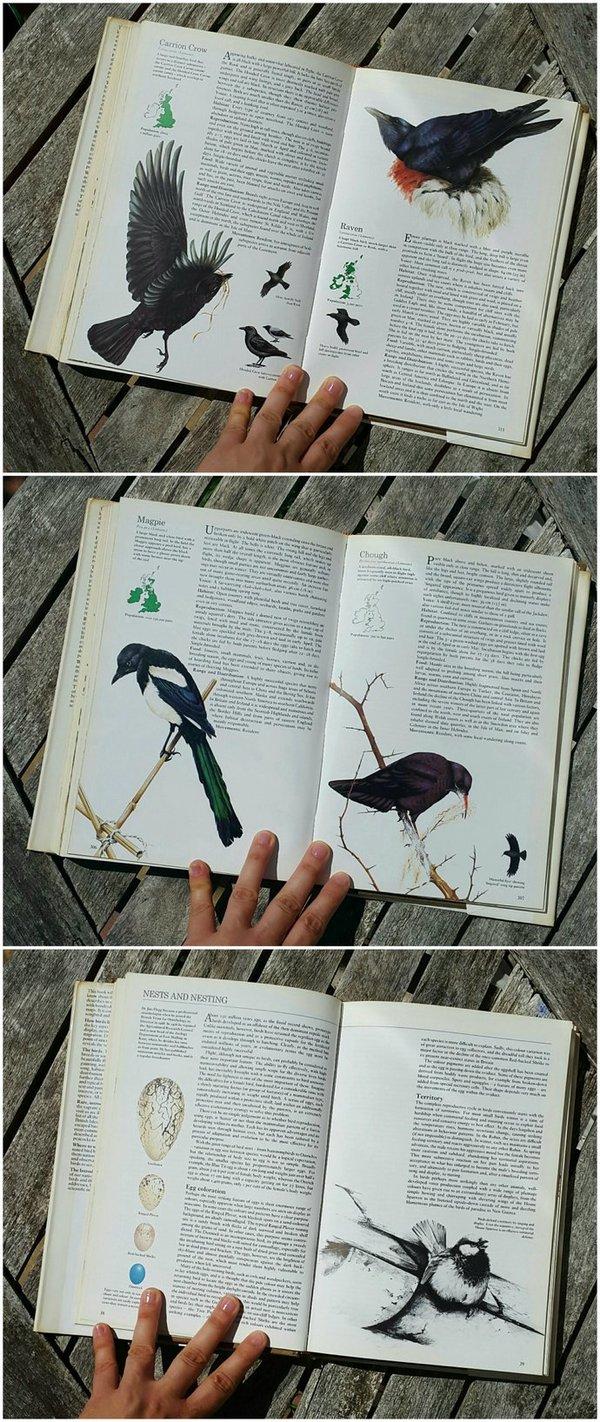 whoopidooings: RYWF - Book purchase - Collins British Birds by John Gooders, Terence Lambert