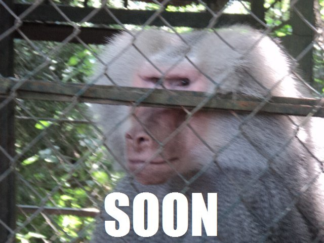 """30 Funny Soon Meme Pics: Amazing Animals Pictures: """"Soon"""" The Amazing And Funny"""