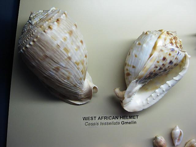 West African Seashells, detail