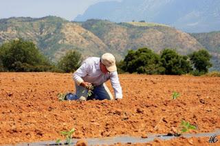 Ερχεται κόφτης στις αγροτικές ενισχύσεις