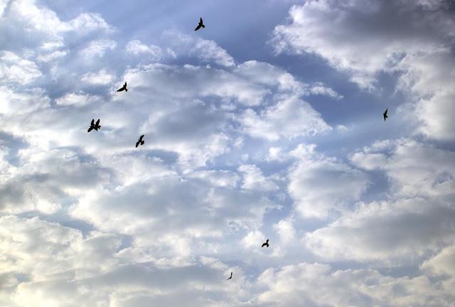 blue sky, skywatch, bandra east, clouds, birds, mumbai, afternoon, winter, india,