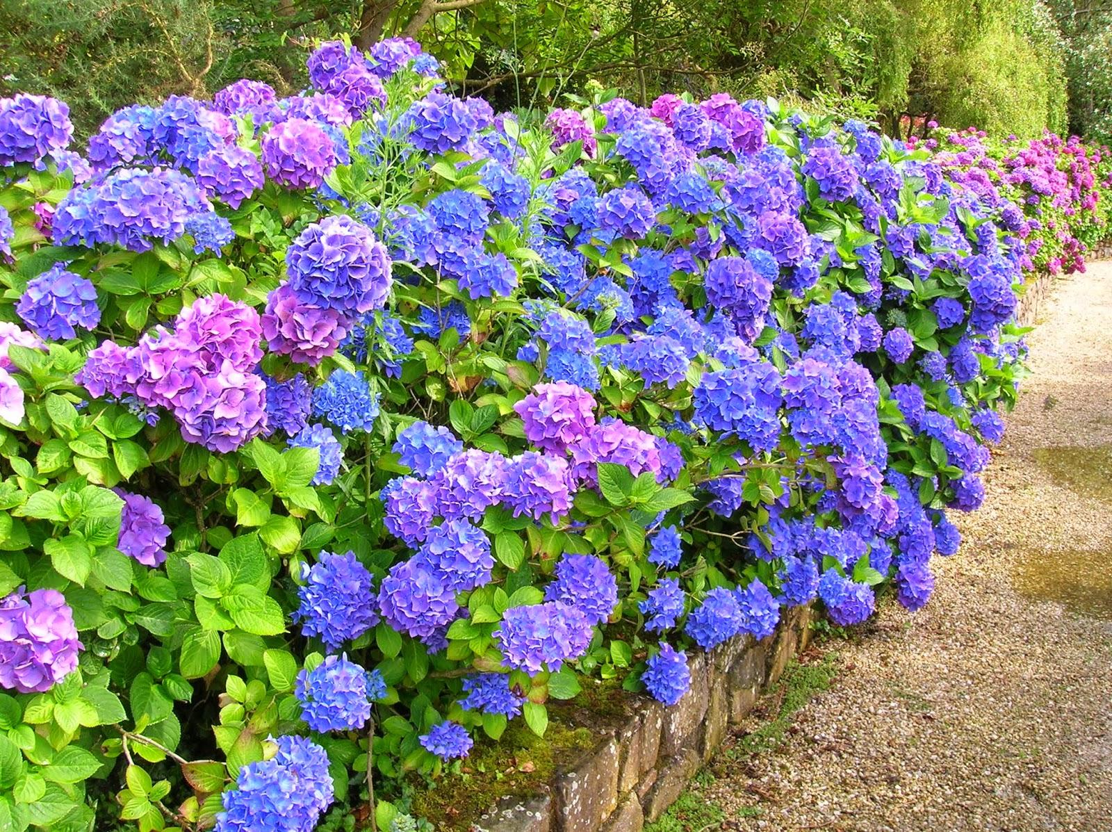 fotos de jardines de flores