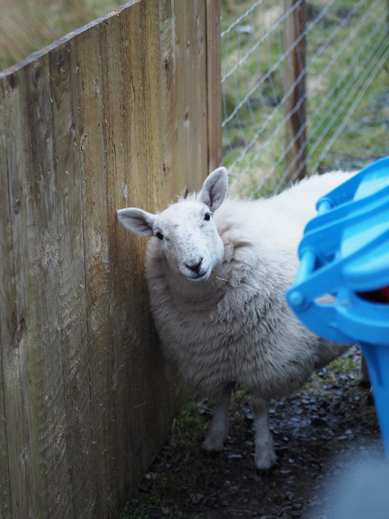 Lamb at AirBnB