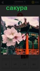 цветет сакура на фоне беседки 6 уровень игры 800 слов