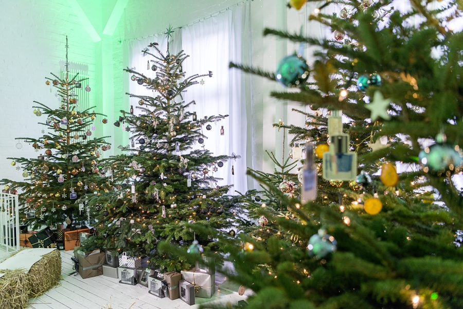 weihnachtsbäume event blog