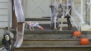man's best skeleton