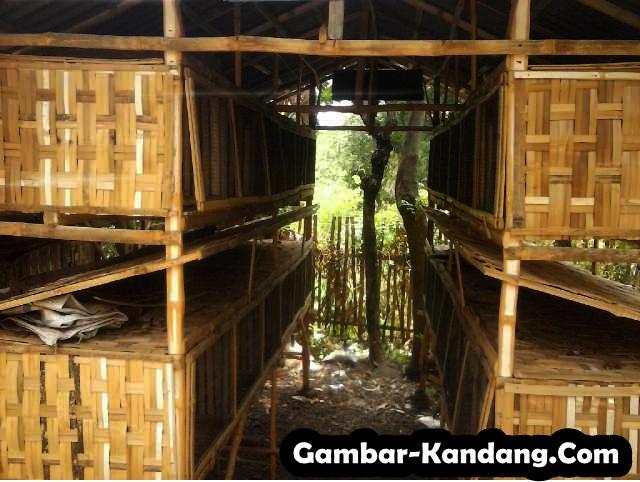 Contoh Kandang Kelinci dari Bambu, Model/Desain Bertingkat Cocok Untuk Kelinci Pedaging