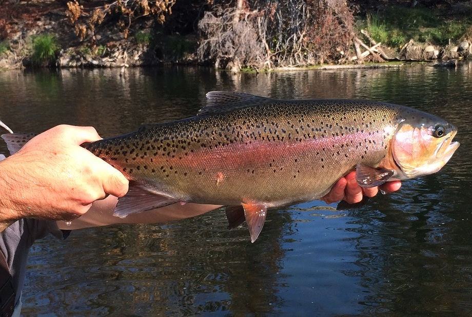Fly Fishing Specialties: Northern California Fly Fishing