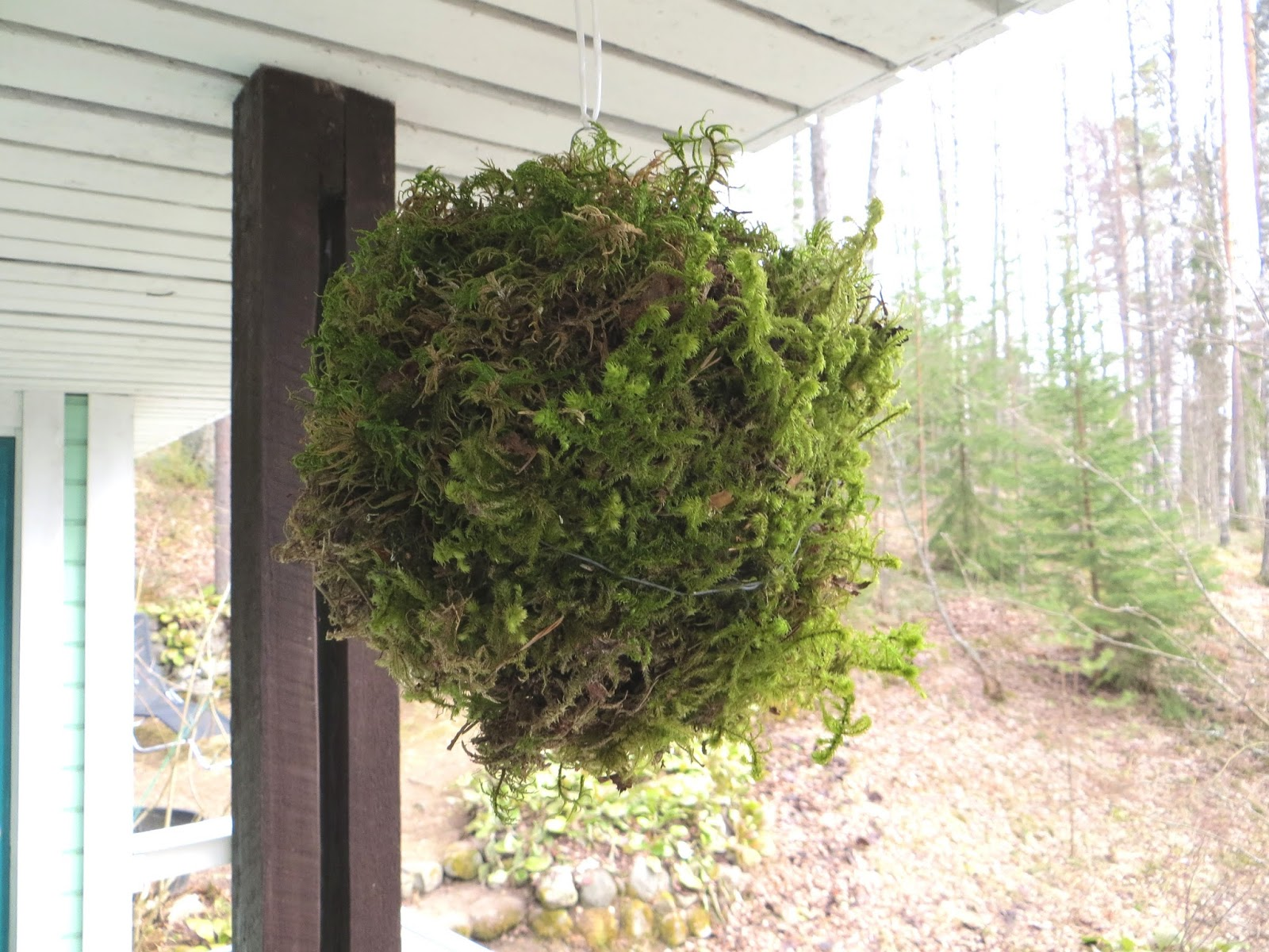 moss ball decoration