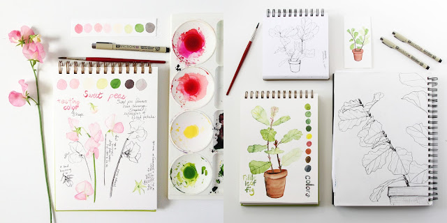 watercolor, sketchbook, Anne Butera, Botanical watercolor, botanical sketchbook, sweet peas, fiddle leaf fig