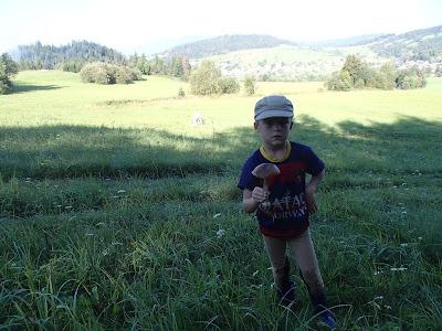 grzyby w sierpniu, grzyby 2016, jadalne koźlarze, grzyby na Orawie, grzybobranie z koniem