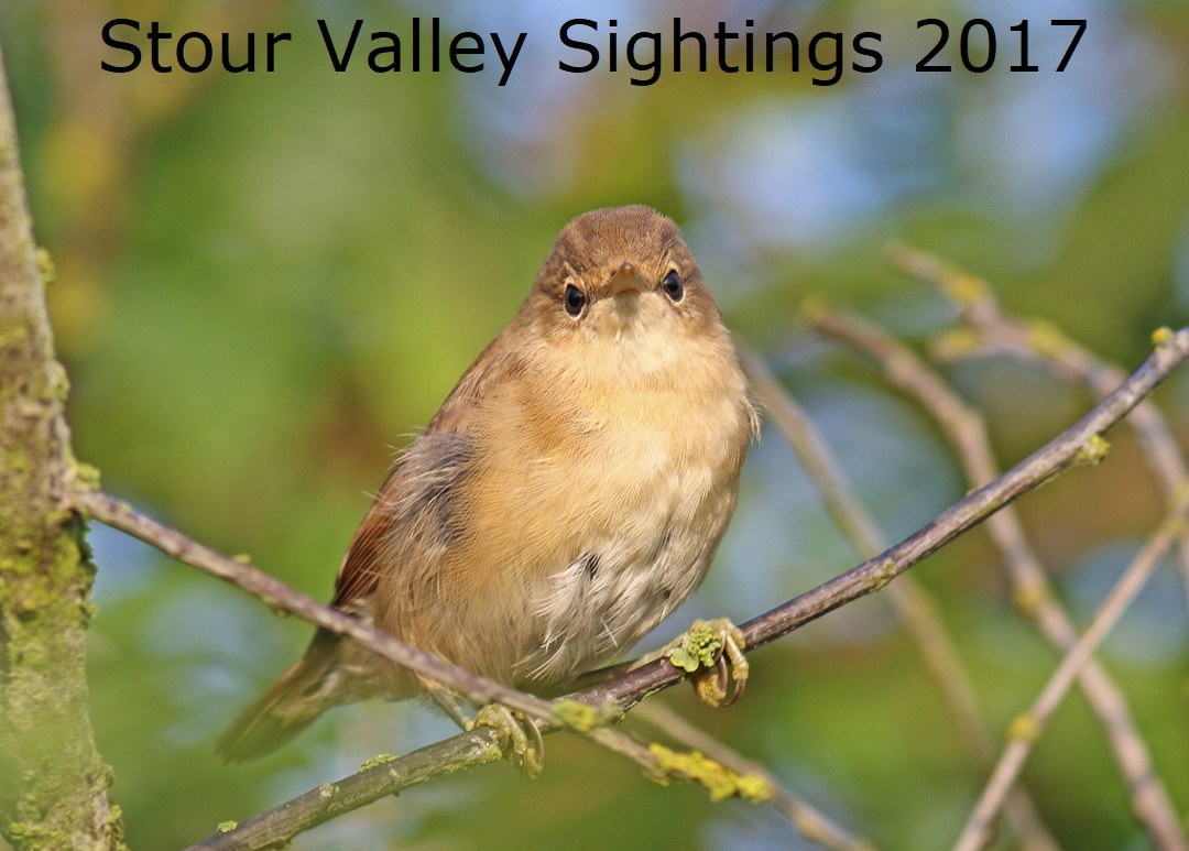 Stour Valley Sightings