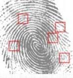 sensor fingerprint