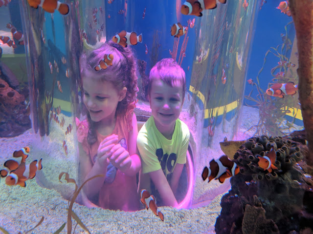 Gatlinburg, vacation, travel, family fun, to do with kids, Gatlinburg attraction, Ripley's Aquarium, Ripley's Aquarium Gatlinburg, Gatlinburg TN, Tennessee, fish, aquarium, tourist attraction, Gatlinburg with kids, clown fish