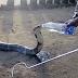 IMPRESSIONANTE: Vídeo mostra cobra mais venenosa do mundo bebendo água na garrafa, assista