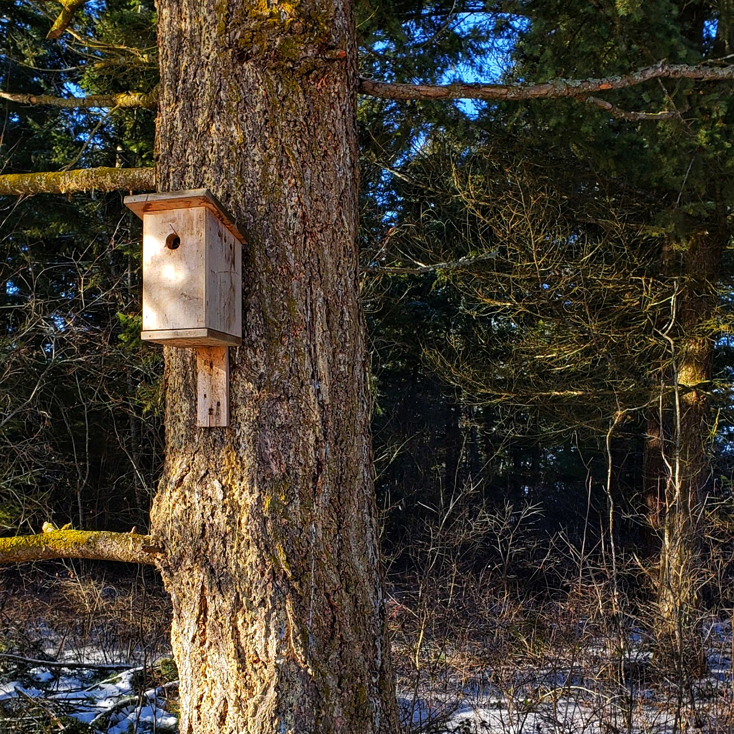 birdhouse on tree in the forest from www.ruralmag.com