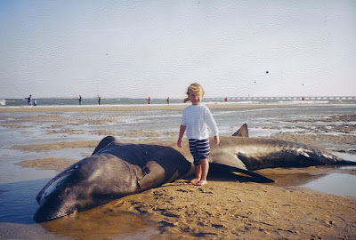 beached basking shark, Hatteras, NC, OBX