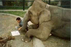 Gajah 🐘 Mukidi