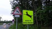 Őzet gázoltak Nyíregyháza és Sóstó között, vadveszélyre figyelmeztetnek a szakértők. vadveszélyőzgázolás.