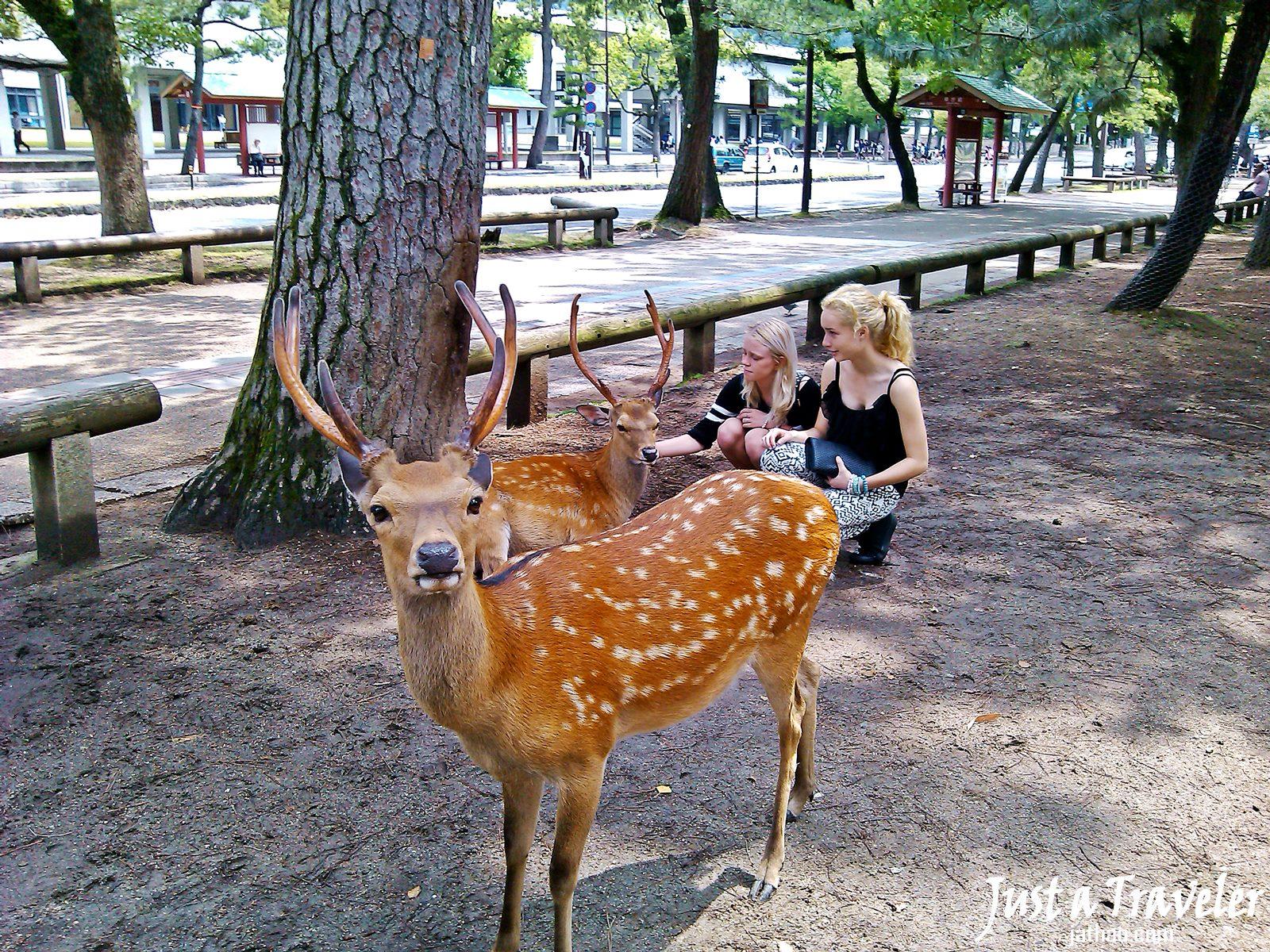 奈良-景點-推薦-奈良公園-Nara Park-市區-自由行-必玩-必遊-旅遊-觀光-日本-Nara-Tourist-Attraction
