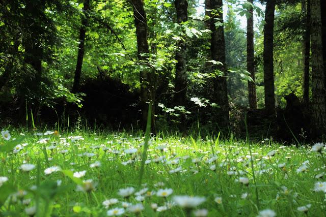 pajiste macro padure umbra verde iarba frunze