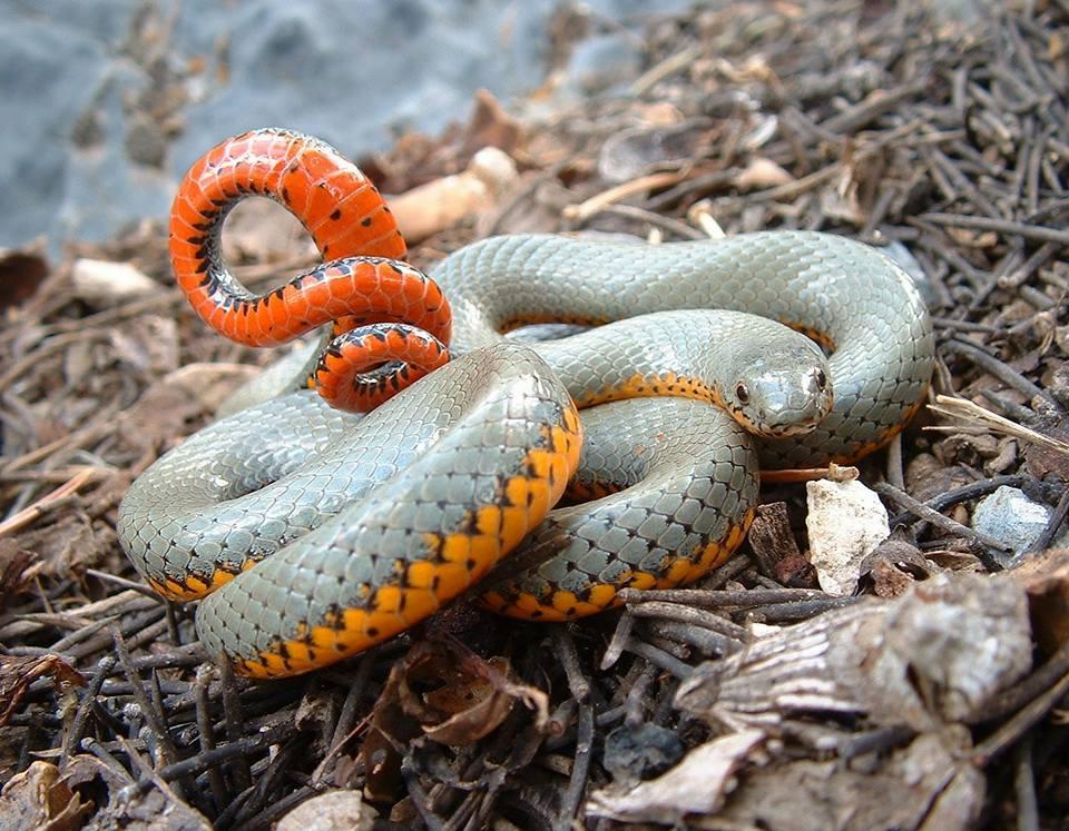 младшая какие змеи обитают на мальдивах фото этой статье хотел