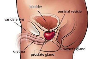 prostatite e insufficienza renale