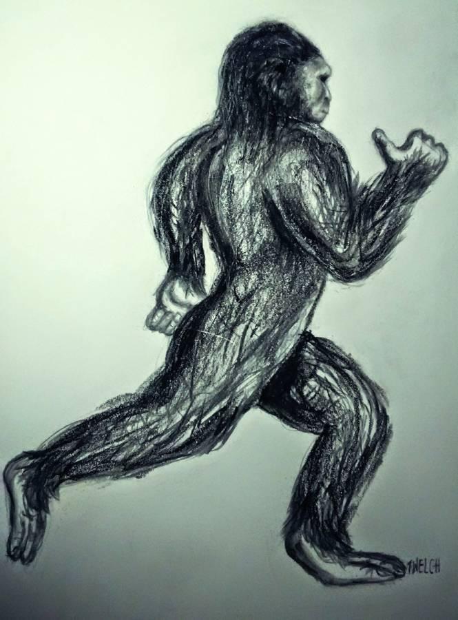 Looking for Bigfoot In Maine - Craigslist Sasquatch