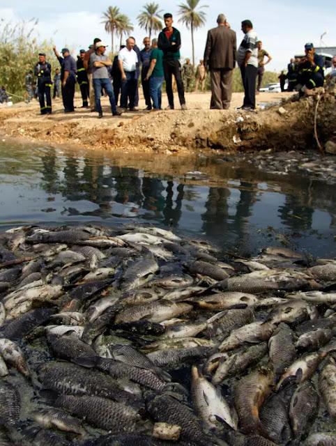 Ribuan Ikan Mas Mati Mendadak di Sungai Eufrat, Sabda Nabi tentang Kiamat Jadi Kenyataan?