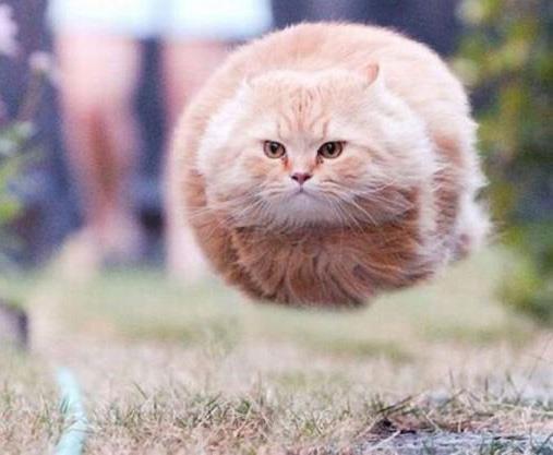 Unduh 65+  Gambar Kucing Terbang Terlihat Keren