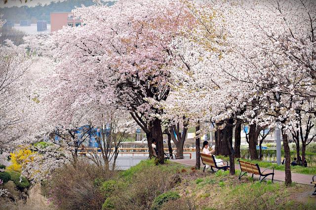 Tổng hợp bộ đề thi tiếng Hàn Topik 2015