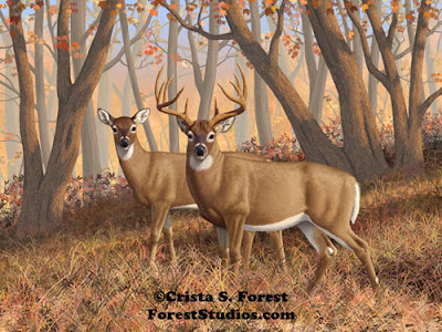 http://pixels.com/featured/whitetail-deer-painting-fall-flame-crista-forest.html