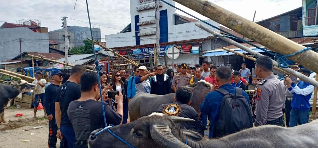 [FOTO] Kedatangan Tamu Istimewa, Pasar Kerbau Bolu Jadi Serbuan Warga