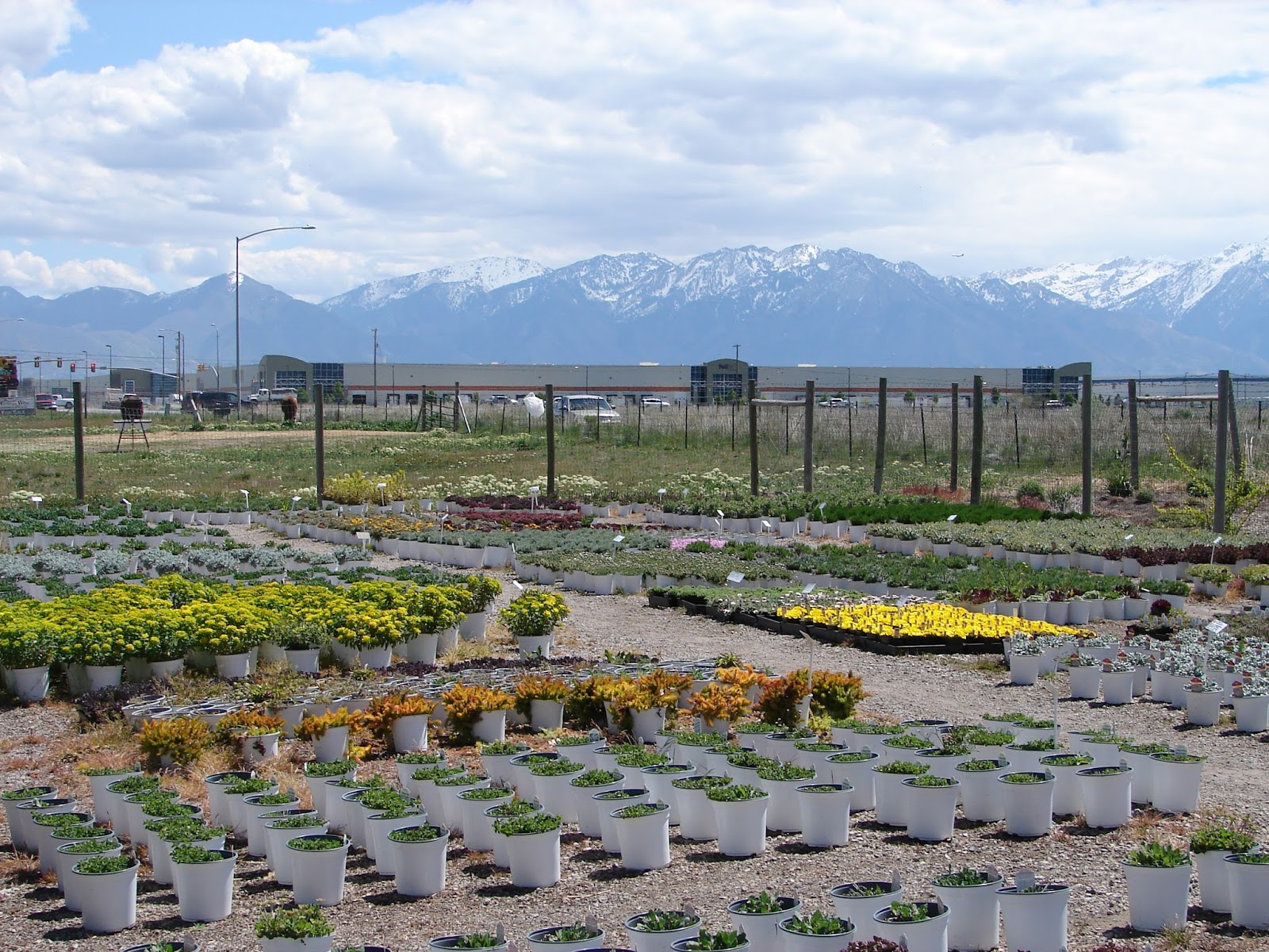 Nurseries in salt lake city -  Nursery Perennial Farm Salt Lake City Utah New Utah Gardener Where Can I Waterwise And Xeric Plants In