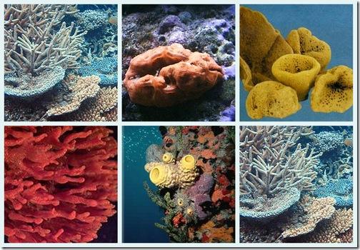 Esponjas de mar reproduccion asexual ejemplos