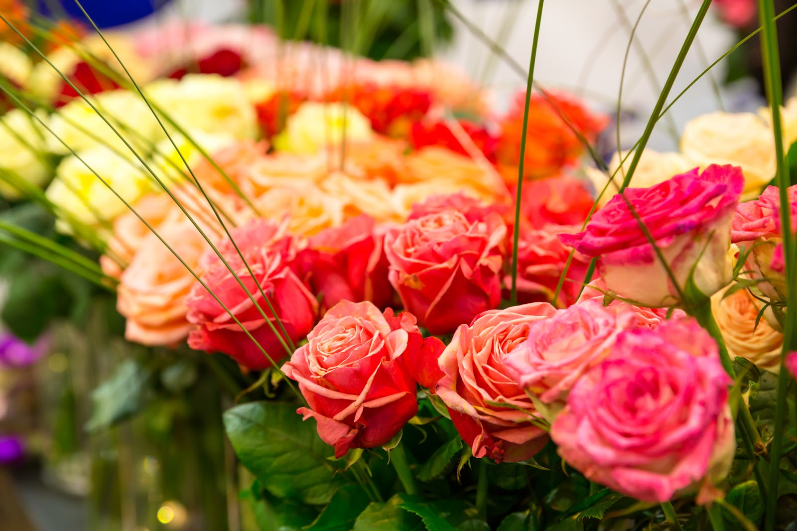 Green Valley Floral: Learn the Hidden Meanings Behind Rose Colors
